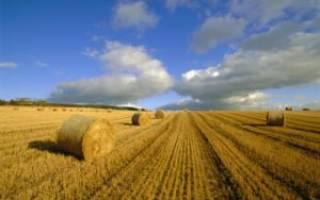 Как приобрести в собственность земельный участок?