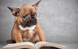 Содержание собак в многоквартирном доме закон РФ