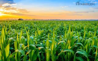 Какие земли являются государственной собственностью