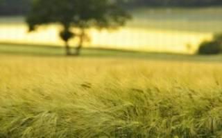 Можно ли строиться на землях сельхозназначения