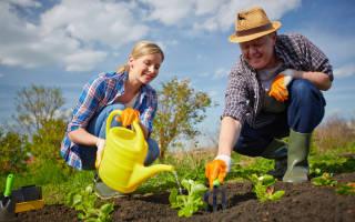 Зарегистрировать коллективную собственность на земельный участок