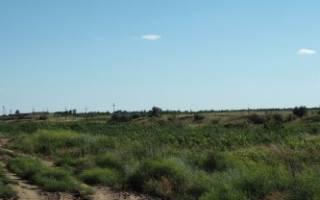 Договор аренды земли с последующим выкупом образец
