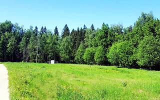 Как взять лес в аренду под вырубку